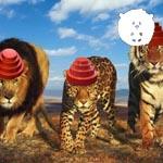 NANUZEANDO: DEVO doa royalties de Whip it para o PETA ajudar grandes felinos